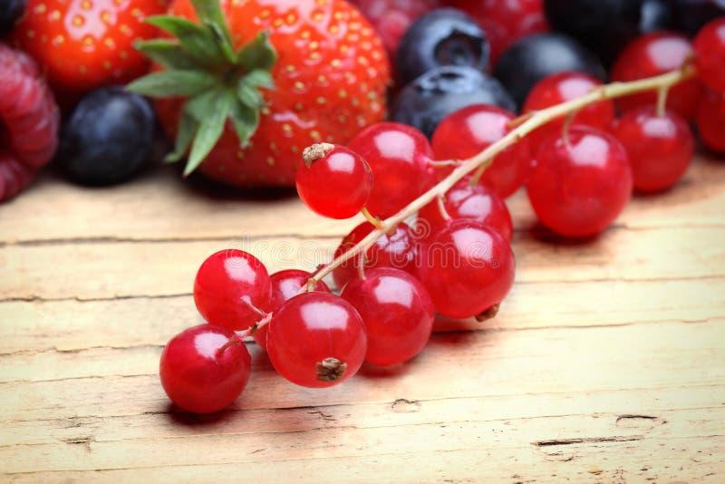 Mezcla de berrie differrerent fotografía de archivo libre de regalías