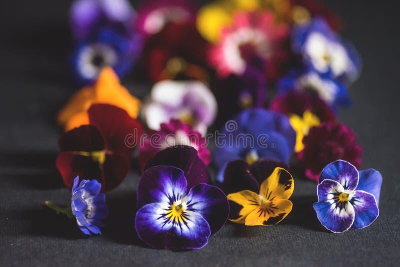 Mezcla de flores comestibles fotografía de archivo libre de regalías