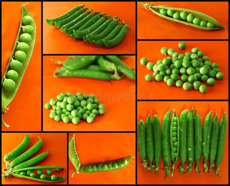 Mezcla de guisantes verdes vegetales con la opinión del primer del germen foto de archivo libre de regalías