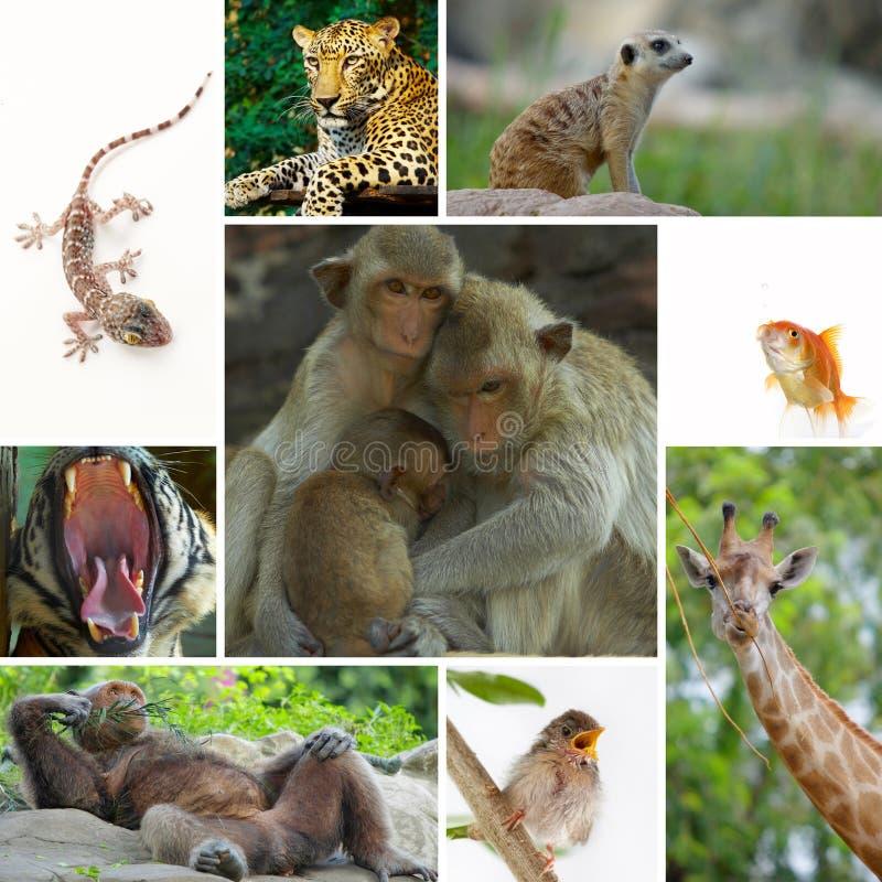 Mezcla de los animales fotos de archivo