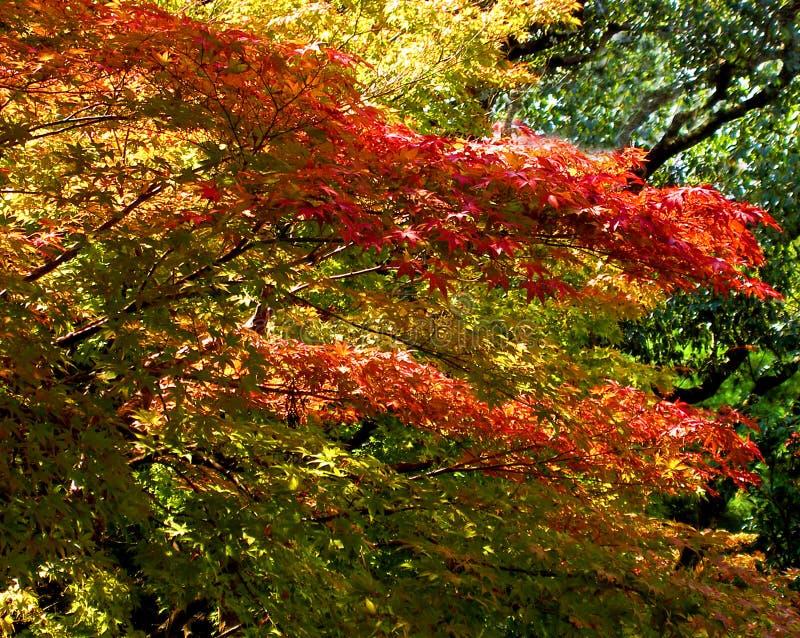 Mezcla de los colores fotos de archivo