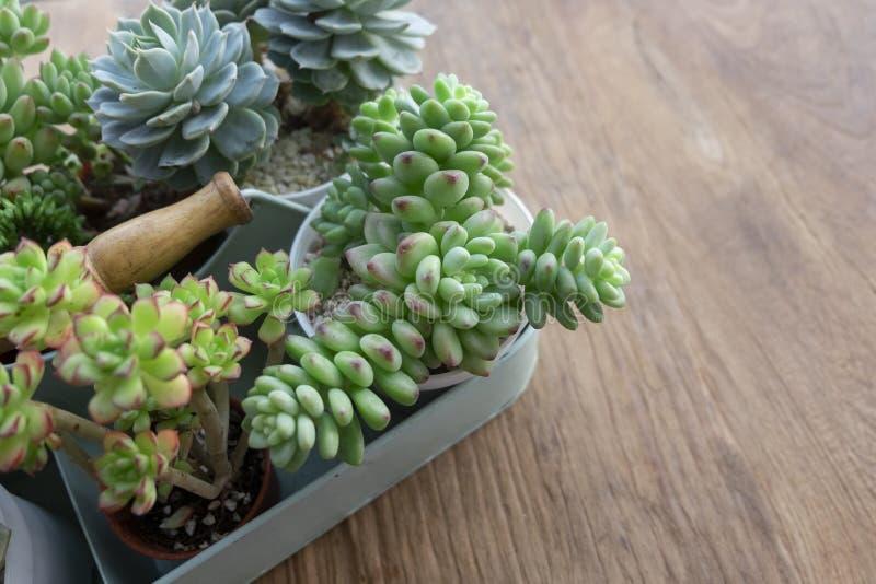 Mezcle las plantas suculentas en la sobremesa fotografía de archivo libre de regalías