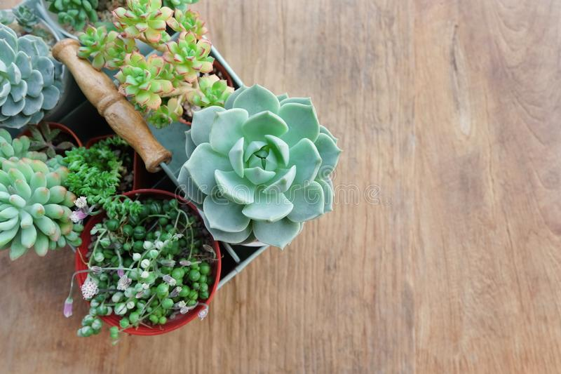 Mezcle las plantas suculentas en la sobremesa fotos de archivo
