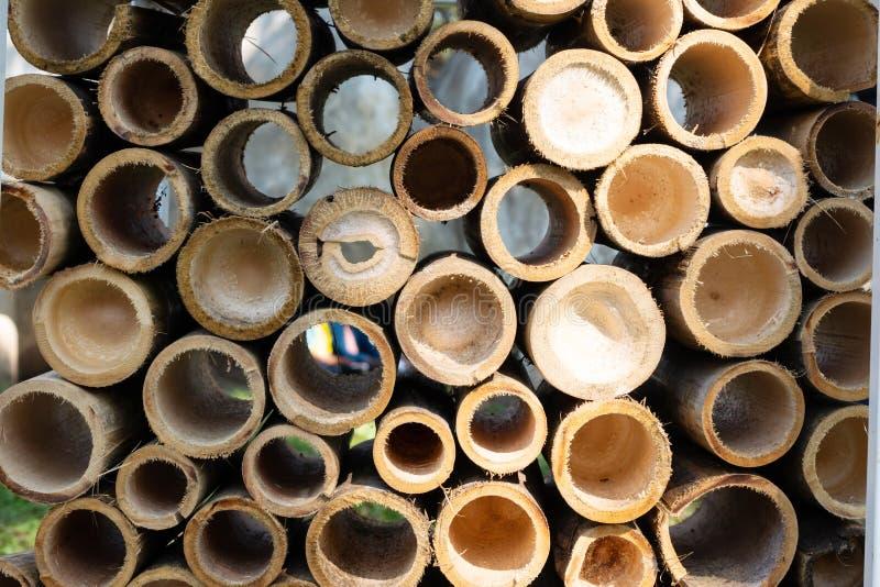 Mezzo bambù tagliato immagini stock