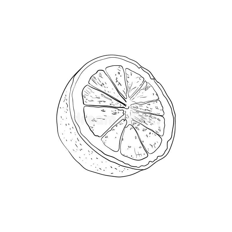 Mezzo schizzo del limone di vettore, disegno nero del profilo isolato su fondo bianco, linee di contorno royalty illustrazione gratis