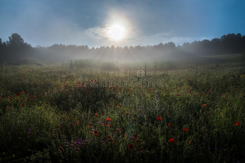 Mgła przy wschód słońca obrazy royalty free