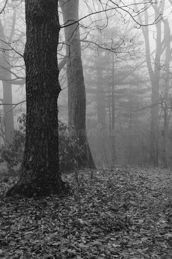 Mgłowa Halna ścieżka zdjęcie stock