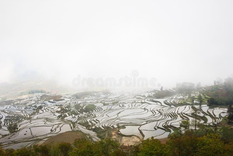 Mgłowy ranek nad ryżowymi tarasami w Yuanyang w Duoyinshu punkcie, Yunnan prowincja obrazy royalty free