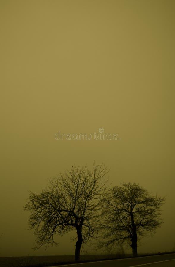 mgła 2 mocniej zdjęcia royalty free
