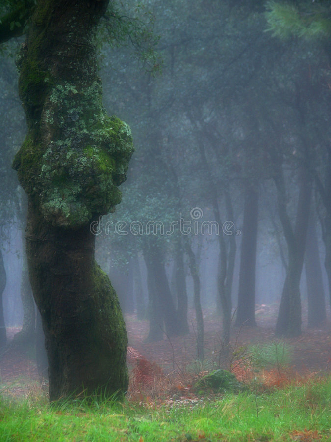 mgła. obrazy royalty free