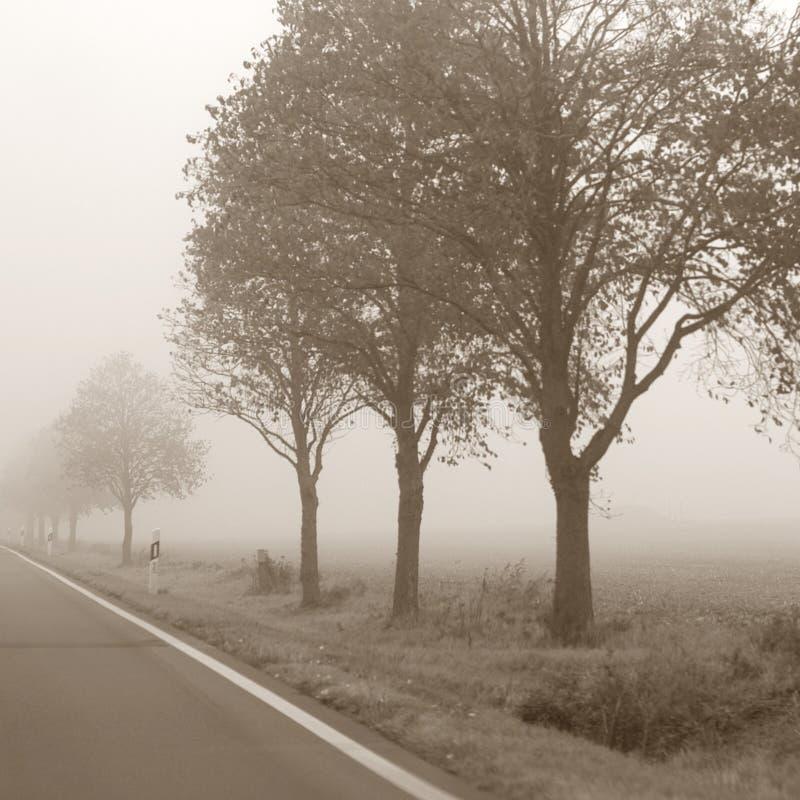 mgła. fotografia royalty free