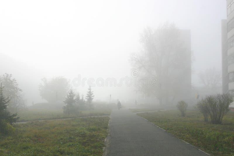 mgła. obraz royalty free