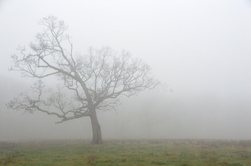 mgła fotografia royalty free