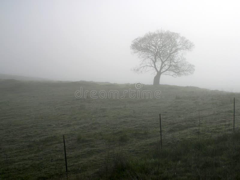 mgła drzewo zdjęcia royalty free
