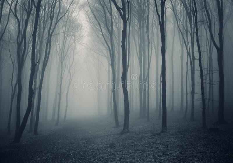 mgła elegancki las fotografia stock