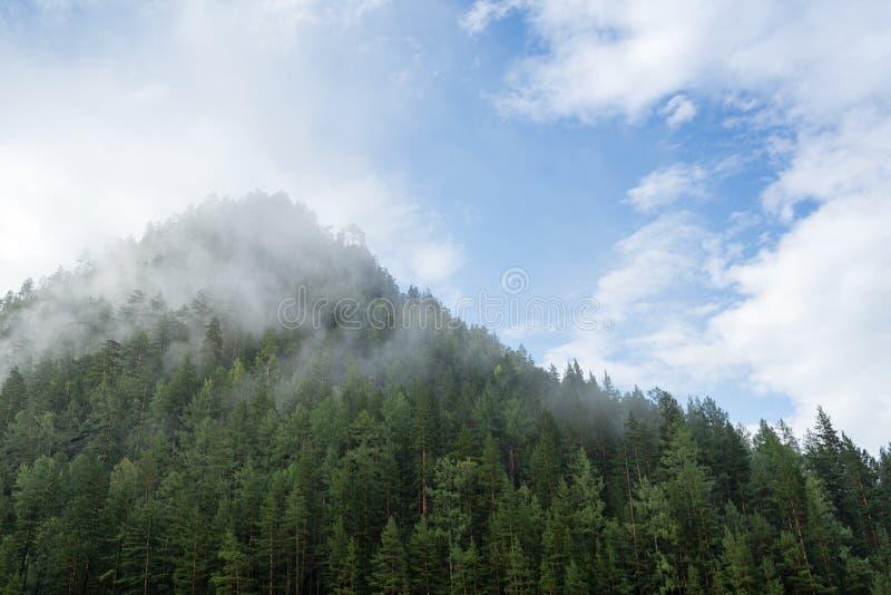 Mgła i chmury nad tajgi wzgórzem z sosnami zdjęcie stock