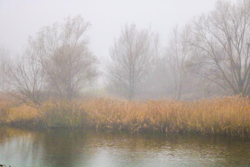 Mgła i jezioro zdjęcia stock
