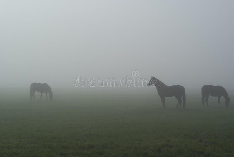mgła konie obrazy stock