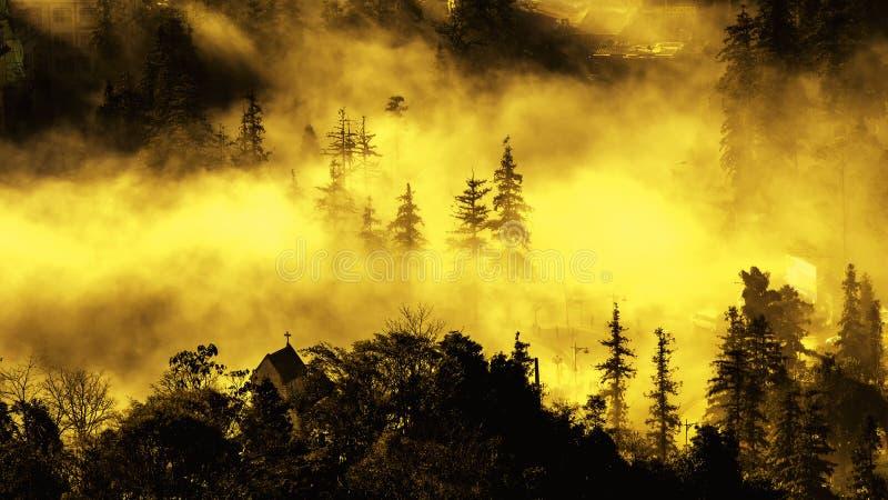 Mgła która zakrywa wierzchołek drzewo z pomarańczowym światłem słonecznym obrazy stock