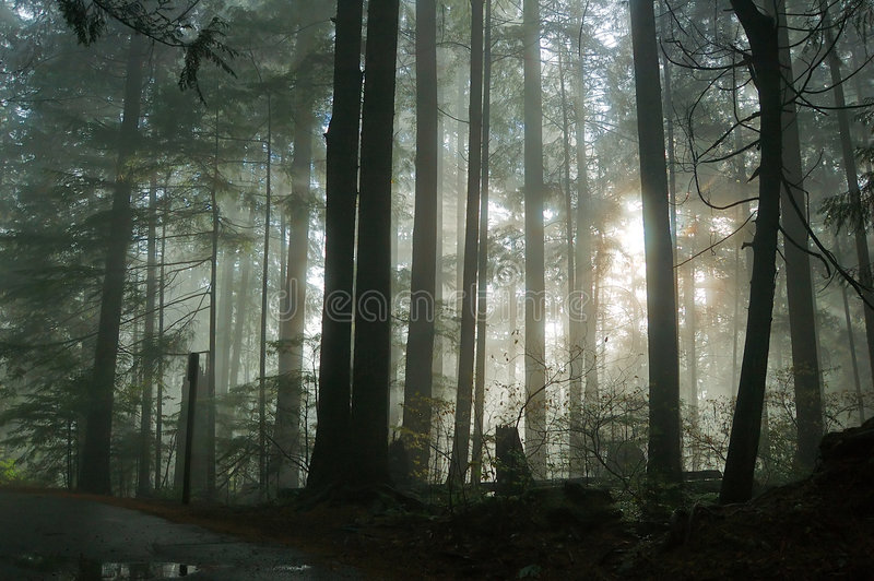 mgła las zdjęcie royalty free