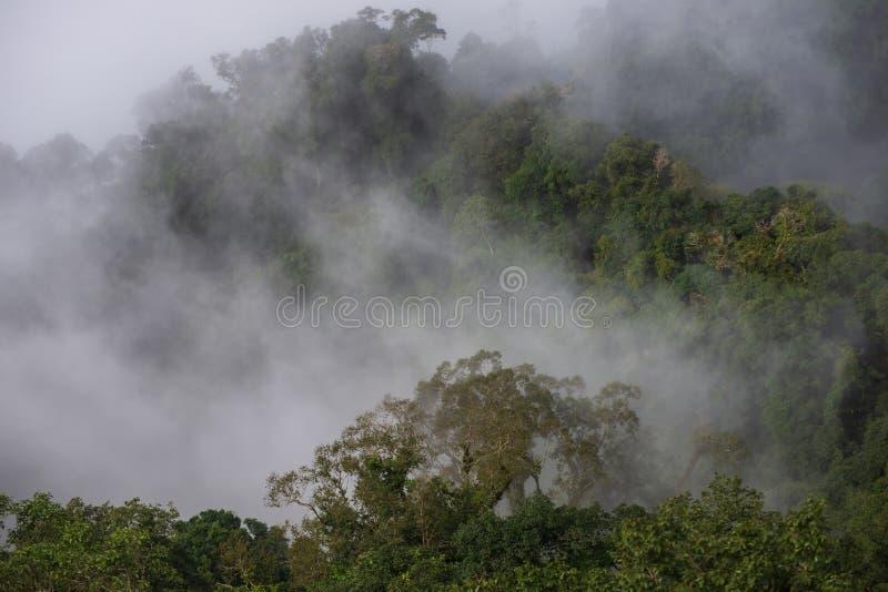 Mgła na górach i lesie zdjęcia royalty free