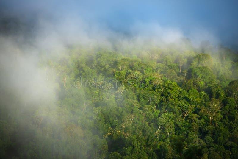 Mgła na górach i lesie zdjęcia stock