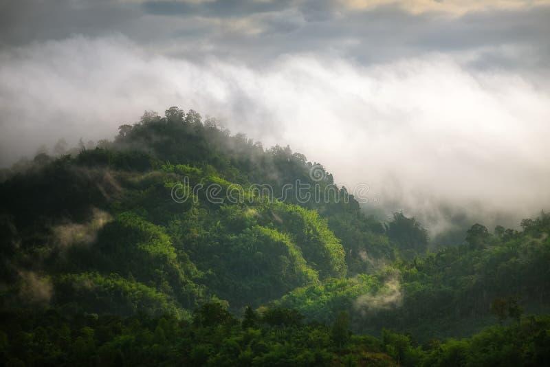 Mgła na górach i lesie zdjęcie royalty free