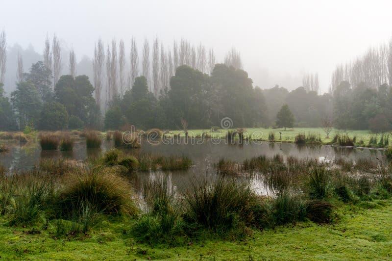 Mgła nad jesieni jeziorem fotografia royalty free