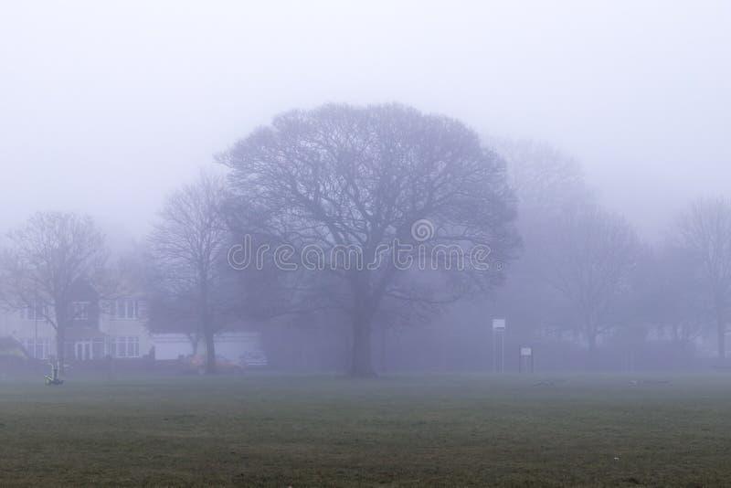 mgła park obrazy royalty free