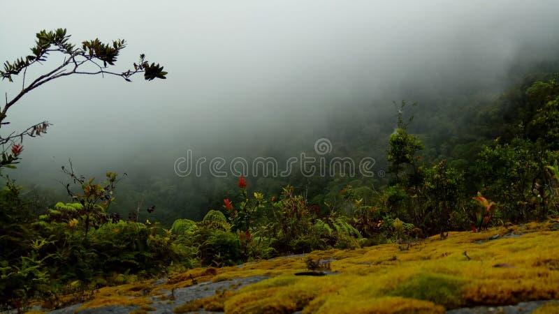 mgła po środku lasu zdjęcie royalty free