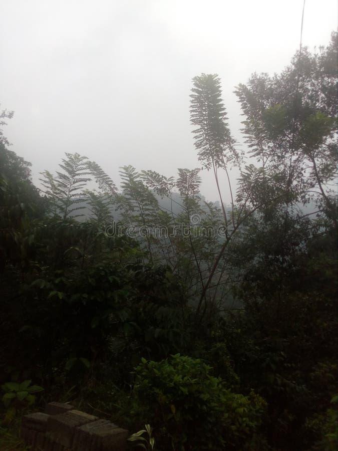 Mgła ranku czas zdjęcie royalty free