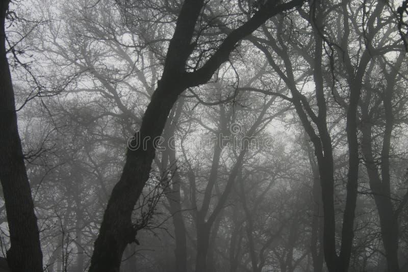 mgła się drzewa zdjęcie royalty free
