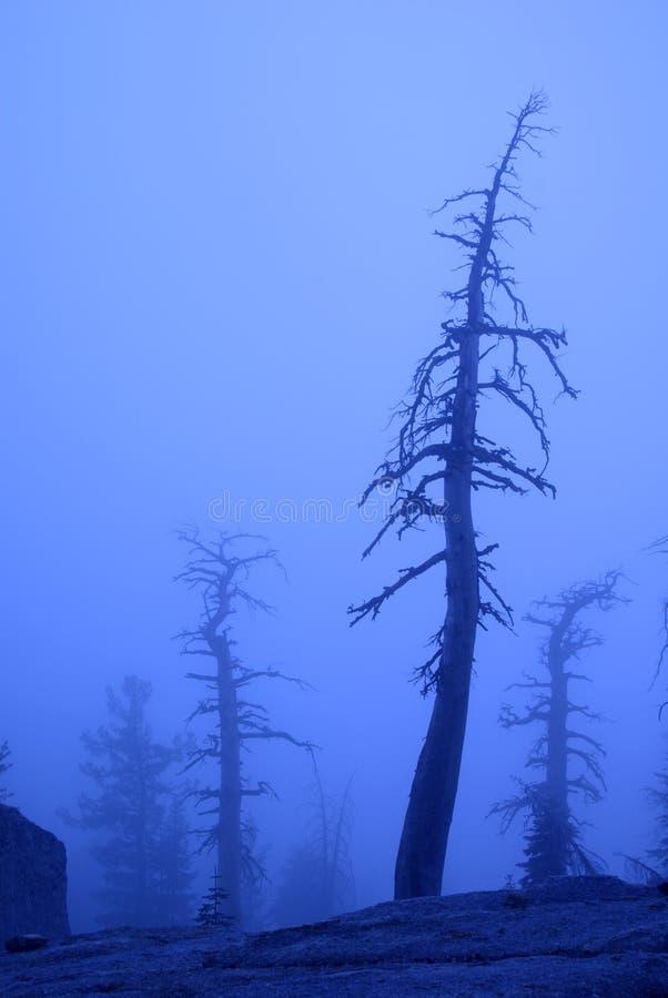 mgła się martwe drzewo fotografia royalty free