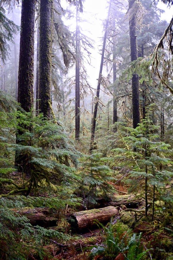 Mgła w drzewach zdjęcie royalty free