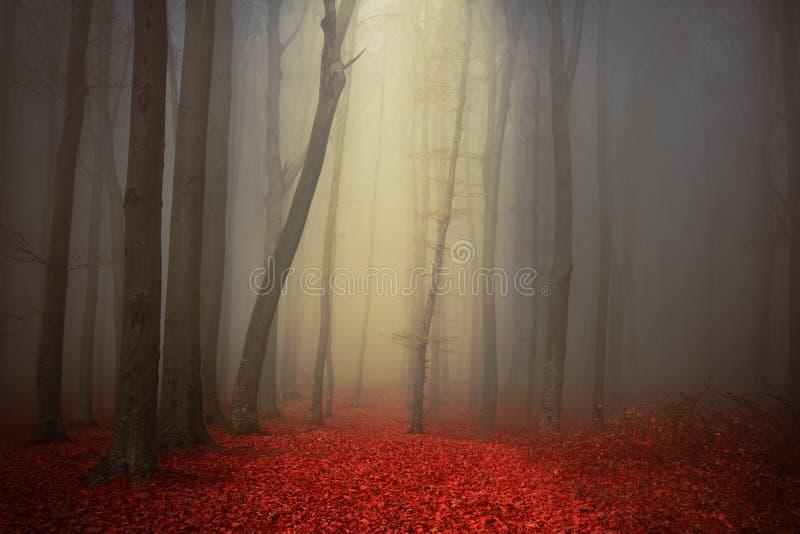 Mgła w magicznym lesie fotografia royalty free