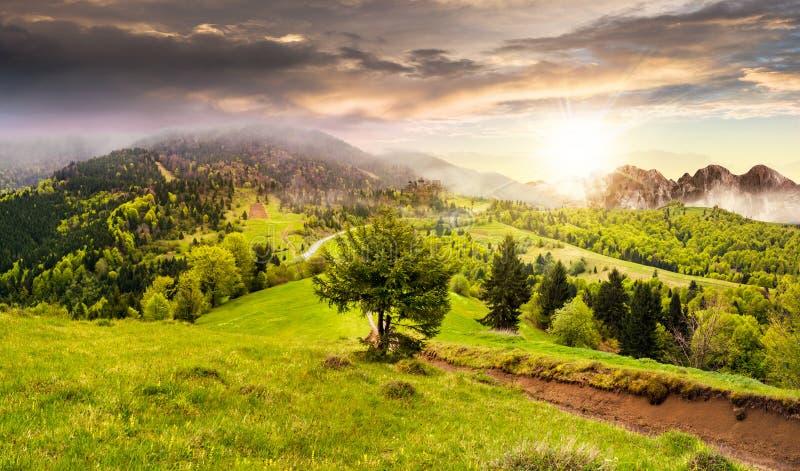 Mgła wokoło kasztelu na halnym wzgórzu przy zmierzchem fotografia royalty free