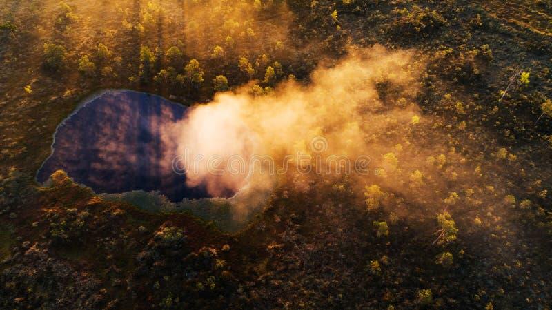 Mgła wyłania się od Estońskiego bagna jeziora fotografia royalty free