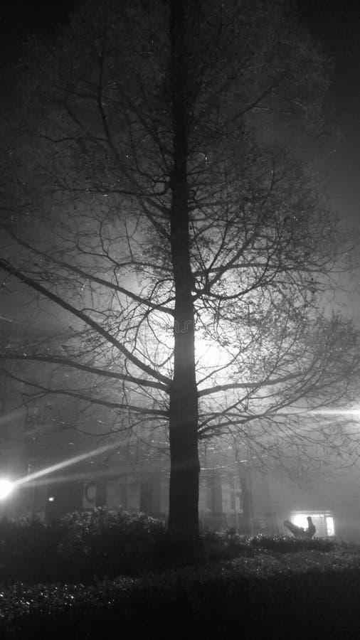 Mgła Zaświecający drzewo zdjęcia stock