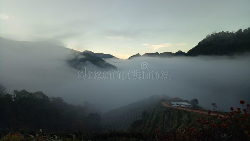 Mgła zakrywał ranek herbacianą plantację obraz royalty free