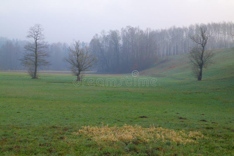 Mgławy ranku krajobraz z łąką obrazy royalty free