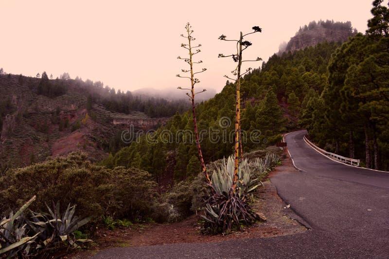 Mgłowa droga wśród lasu w górach zdjęcia royalty free