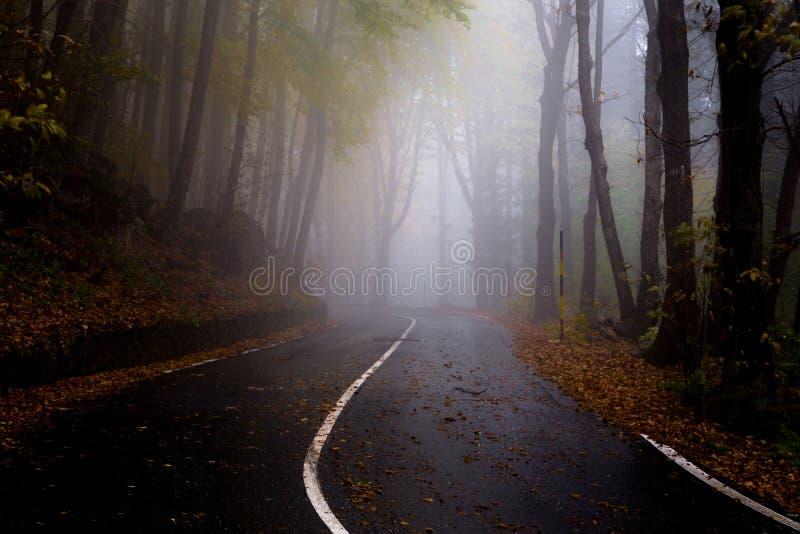 Mgłowa droga w jesień bukowym lesie po deszczu obrazy stock