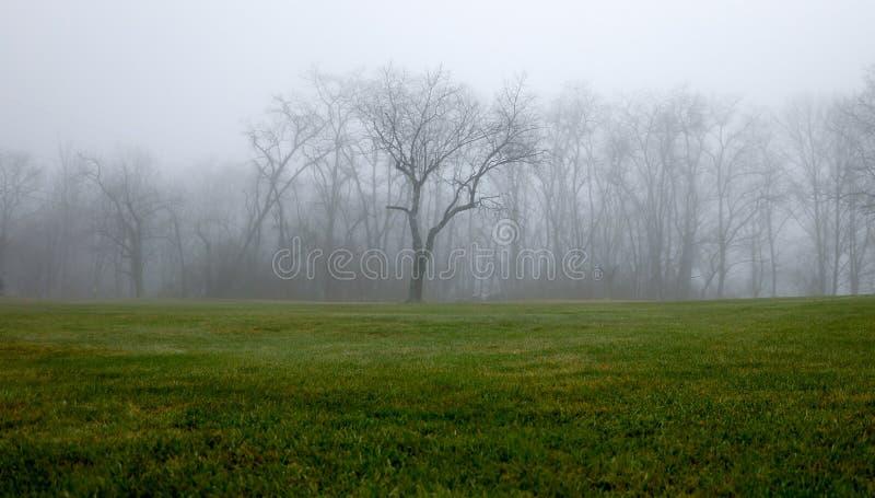 Mgłowa Drzewna linia zdjęcia stock