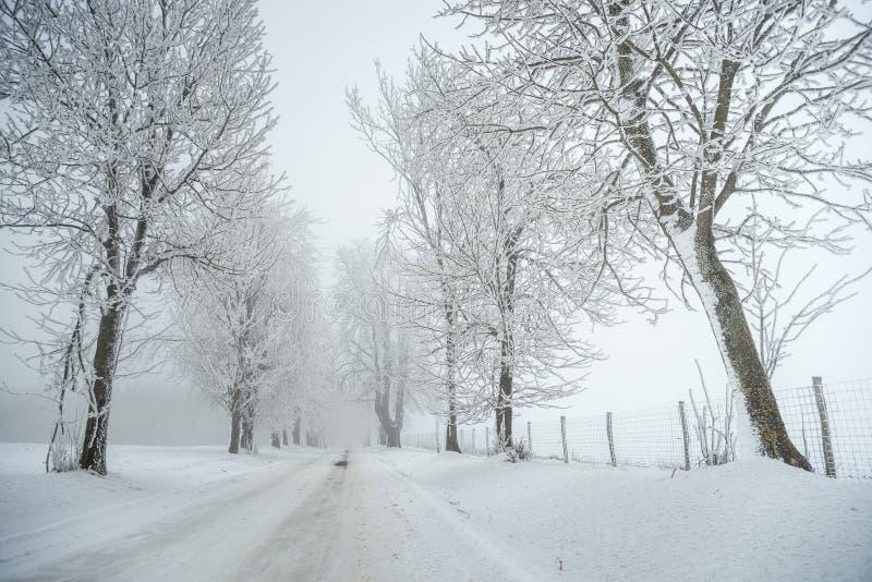 Mgłowa, mroźna zimy droga z drzewami/ fotografia royalty free