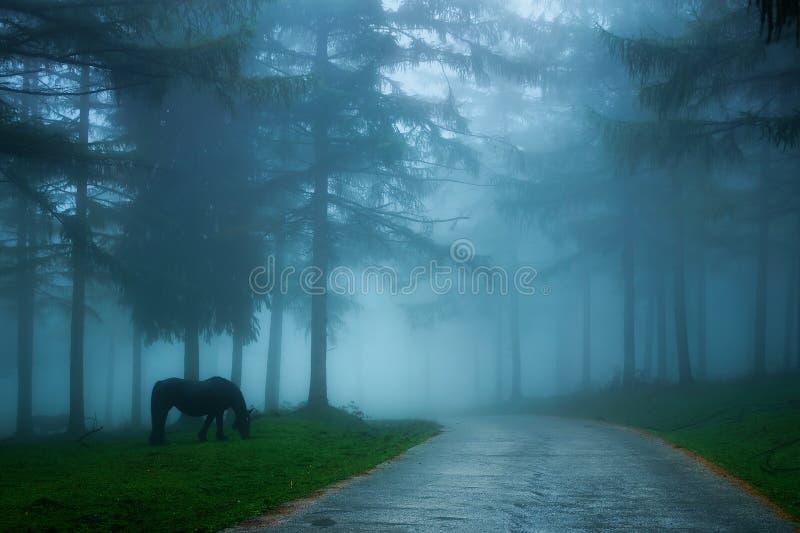 Mgłowa wiejska droga przez mgłowego lasu z koniem fotografia stock
