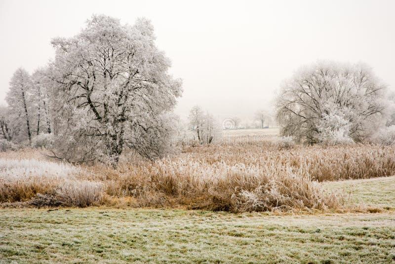 Mgłowa zima sceniczna z frosted drzewami zdjęcie royalty free
