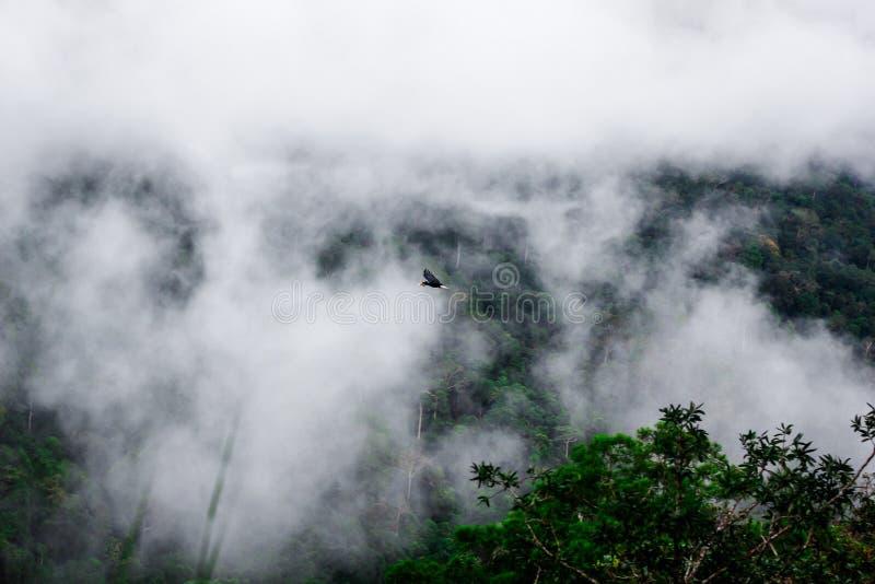 Mgłowe góry otacza niskie chmury i dzioborożec Latają w Tajlandia zdjęcia royalty free