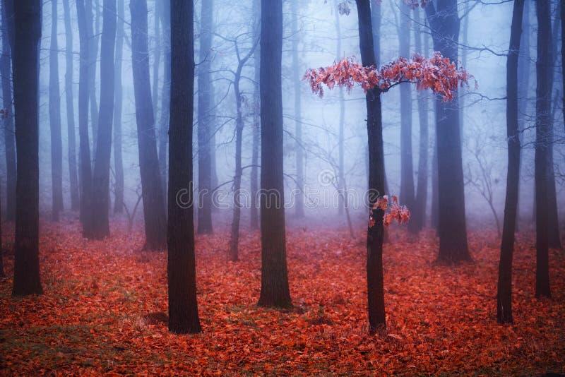 Mgłowi drzewa w lesie z czerwonymi liśćmi fotografia royalty free