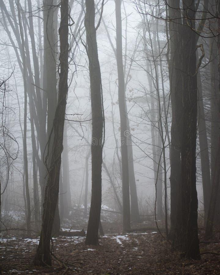 Mgłowi twarde drzewa obrazy stock