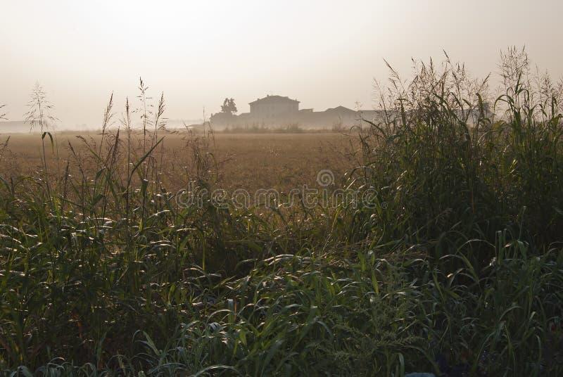 Mgłowy świt obrazy stock